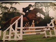 Excellent Showjumping Gent