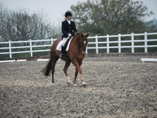 All Rounder horse - 9 yrs 5 mths 16.0 hh Chestnut - Warwickshire