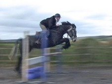 16h 6yrs Ish Steel Grey Gelding