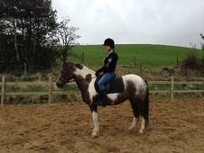 All Rounder horse - 7 yrs 13.2 hh Coloured - Lancashire