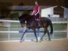 15. 3hh Grade A / Allrounder In Kent