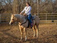 Life Companion Palomino Mare Perfect Under Dressage and Good for ...