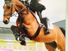 Exceptional KWPN Showjumper ** REDUCED **