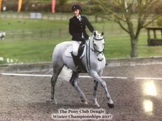 Beauitful 14hh Dressage Pony
