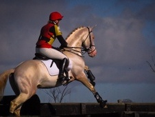 Stallions at Stud horse - 7 yrs 15.3 hh Other - Perthshire