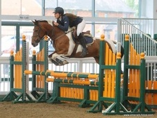 Talented 148cm 6 Year Old Bsja Pony!