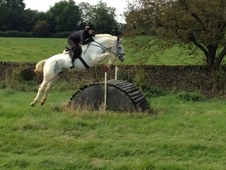 Superb 16hh 5 Year Old Mare