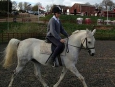 All Rounder horse - 5 yrs 5 mths 15.1 hh Dapple Grey - Middlesex