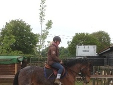 All Rounder horse - 9 yrs 15.0 hh Bay Roan - Essex