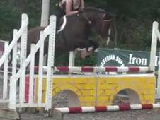 Easy 15hh 4yr Old With Clean 5 Stage Vetting