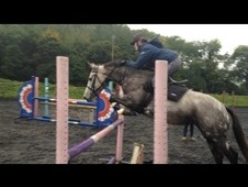 Mothers dream- talented, genuine competition Pony
