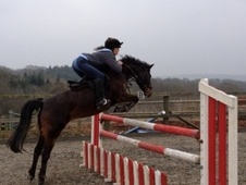 All Rounder horse - 8 yrs 13.0 hh Dark Bay - East Sussex