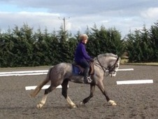 Smart Irish Mare With Lots Of Potential!