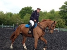 All Rounder horse - 16 yrs 10 mths 16.3 hh Chestnut - Northampton...