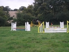 All Rounder horse - 6 yrs 3 mths 16.0 hh Bay - Staffordshire
