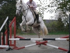 All Rounder horse - 4 yrs 14.1 hh Appaloosa - Cheshire