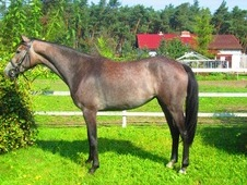 Great Young Mare With Potencial!