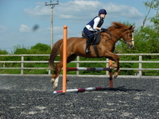 Inca (annandale Sea Spray) Well Rounded, Honest Pony For Sale!