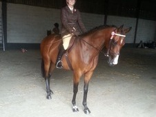 Stunning 6 year old ex racehorse for sale