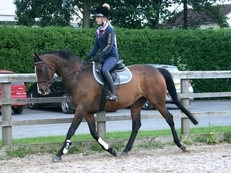 16 year-old - ***Breed Unknown*** - All Rounder - Mare - 16.2 hh - West Yorkshire