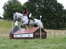 All Rounder horse - 16 yrs 16.3 hh Dapple Grey - Kent