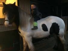 George the cob for sale