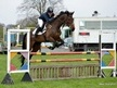 Show Jumpers horse - 6 yrs 15.3 hh Bay - Surrey