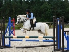Pony Club Ponies horse - 17 yrs 12.1 hh Grey - Avon