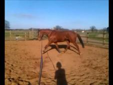 15. 2 TB gelding project horse for full/part loan