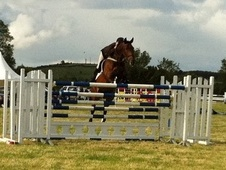 Eventers horse - 8 yrs 16.2 hh Bay - Wiltshire