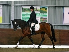 Transitions Dressage Coaching - Nottinghamshire