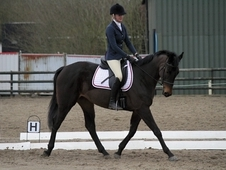 Talented Event/Dressage. ISH by Emperor Augustus/Clover Hill.