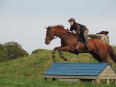16hh Hunter Sj Dsg Event Allrounder
