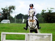 All-rounder 13. 2h palomino X white PC pony for sale