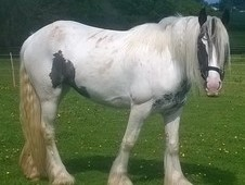 Silver And White Filly