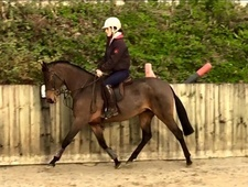Top Class 138cm Riding Pony