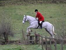 Hunter For Sale 17. 2hh Irish Draught X