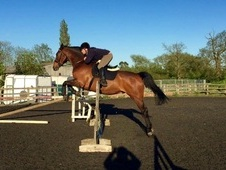 Riding Club/All Rounder Safe and Sane