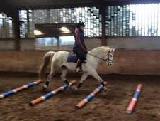 138cm Registered Welsh Section B gelding, 8 years old.