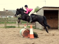 All Rounder horse - 8 yrs 14.3 hh Dark Bay - Suffolk