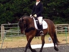 Smart Rc Allrounder/ Hunter
