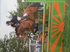 Breaking, Schooling, Re-training and Full livery available!