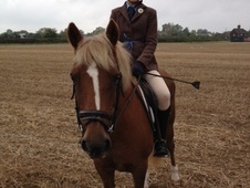 Fantastic pony club pony – ideal first pony – 13. 1hh gelding