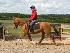 4 Year old Homebred Mare