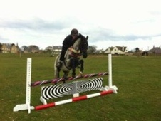 Pony Club Ponies horse - 6 yrs 13.1 hh Blue Roan - Northumberland