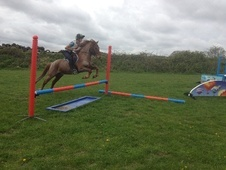 All Rounder horse - 11 yrs 13.2 hh Bay - Kent