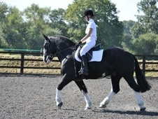 Cobs horse - 9 yrs 4 mths 14.3 hh Black - West Sussex