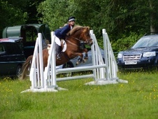 All Rounder horse - 7 yrs 14.0 hh Chestnut - West Midlands