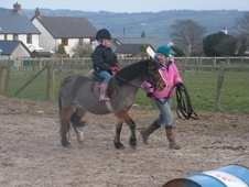 Lead Rein & First Ridden horse - 8 yrs 11.2 hh Bay - Dyfed