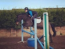 13. 2 Bombproof Jumping Pony